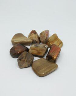bois fossile pierre roulée